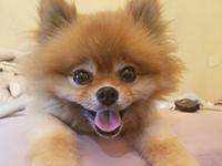 portrait of Chloe's dog, Suzy